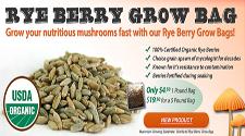 rye_berries