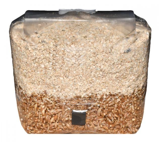 Brown Rice Flour Based All in One Mushroom Grow Bag ™