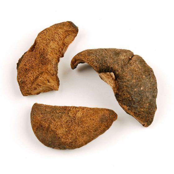Bolete Mushrooms