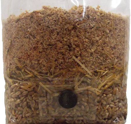 Wood Based All In One Mushroom Grow Bag ™