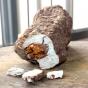 Fu Ling (Poria cocos)