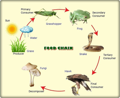 The Role of Mushrooms in the Food Chain