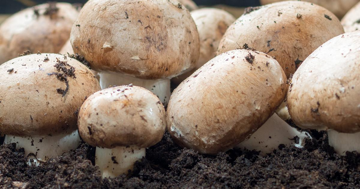 Find Out More About Mushroom Growth