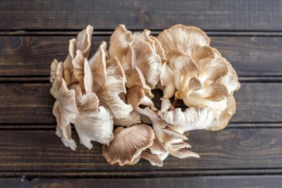 5 Simple Steps on How to Grow Oyster Mushrooms at Home