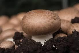 Delicious Ways to Cook Portobello Mushrooms