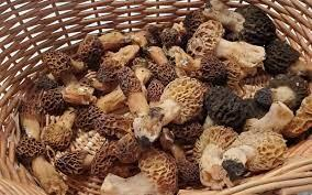 How to Store Morel Mushrooms