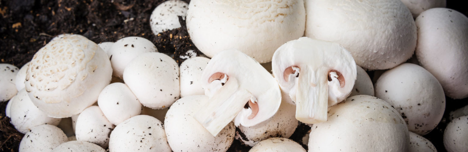 Cultivate Mushrooms To Live More Sustainably