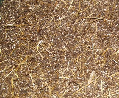 50/50 Horse Manure and Straw Mix Mushroom Substrate