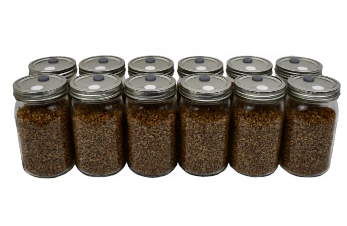 12 Quart Jars of Sterilized Rye Berries Mushroom Spawn