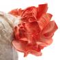 Pink Oyster (Pleurotus djamor)